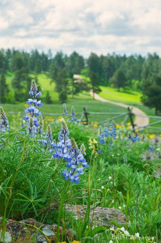 blue lupine and down the Ridge - ID: 13181908 © Deborah H. Zimmerman