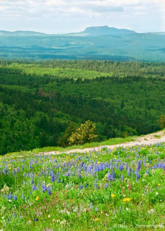 Looking across the Northern Hills in June - ID: 13181912 © Deborah H. Zimmerman