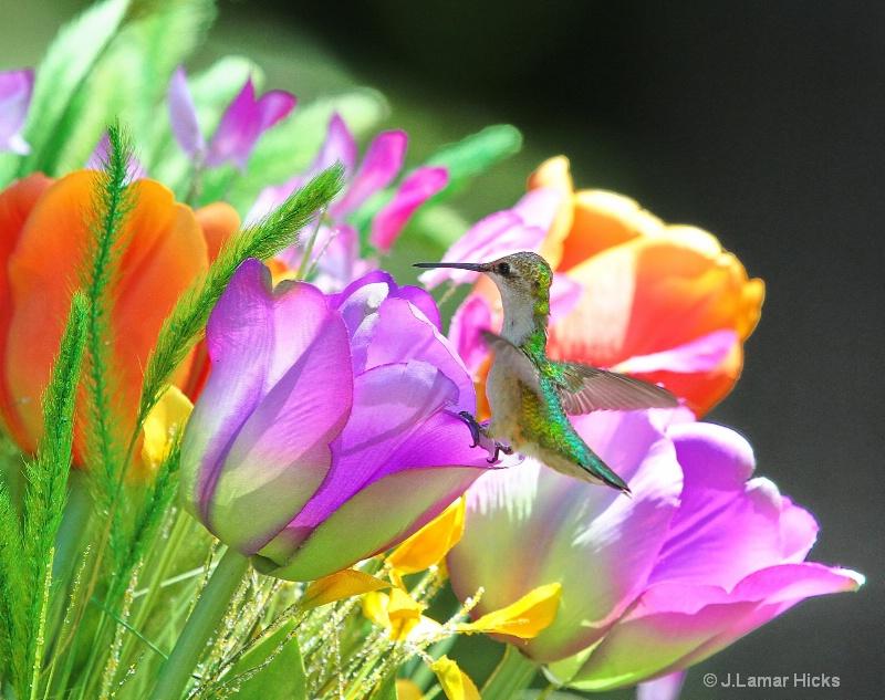 Female ruby throated/tulip rest