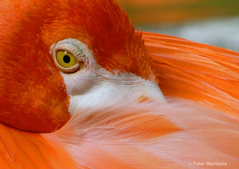 Flamingo's Eye