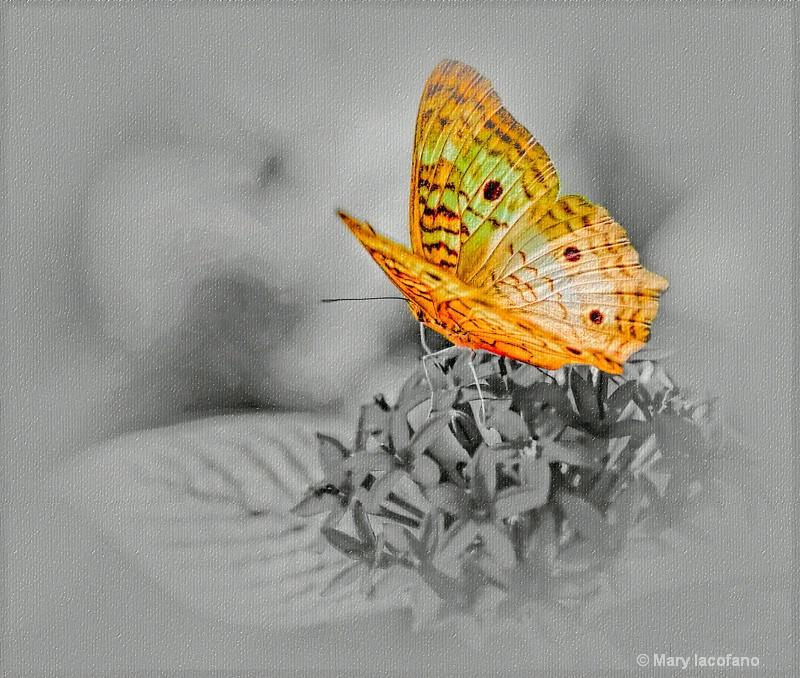 - ID: 13191866 © Mary Iacofano