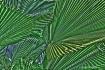 Palms Facing Up