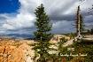 Monsoons at Bryce