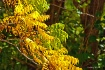 Precursor Of Fall