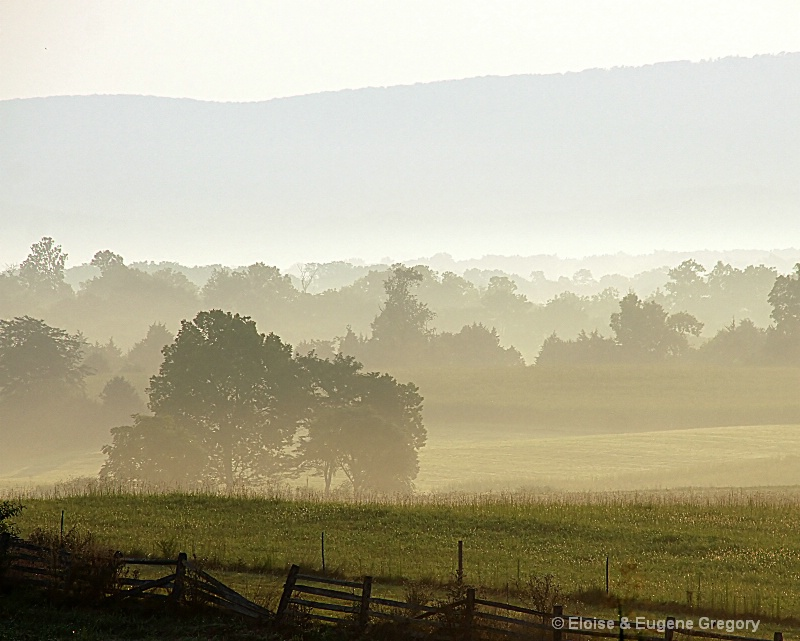 Fog on the Field