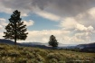 Yellowstone - Pea...