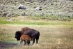 Yellowstone - Fee...