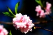 <i><b>+ New Bloss...