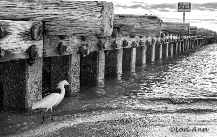 Mindful Egret