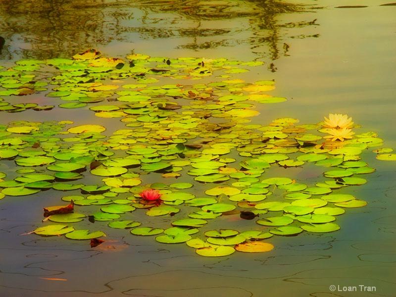 Waterlily Pond - ID: 13237540 © Loan Tran