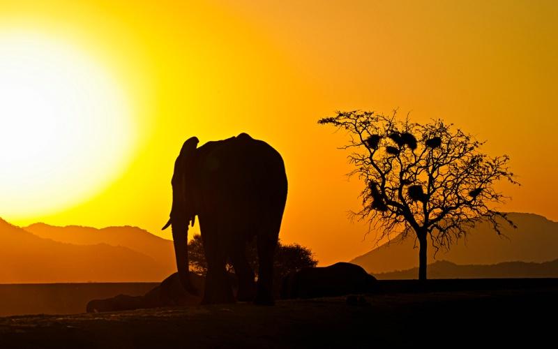 Elephant in silhoette