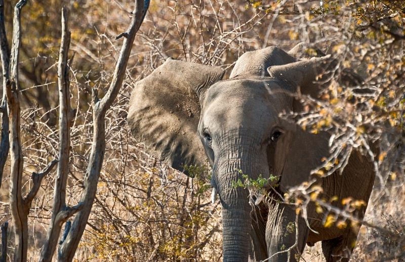 Elephant in distress