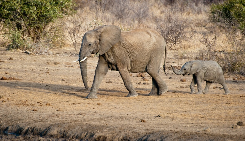 Big and small.  Elephant and her calf