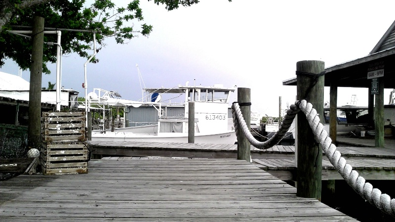 Star Fish Dock
