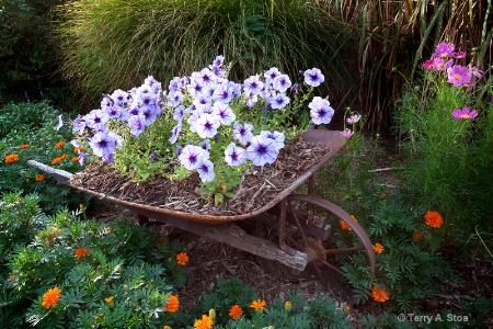 Wheelbarrow Full of Petunias