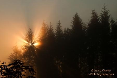 Sunrise Through Early Morning Fog