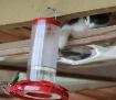 Sneaky Kitty Kat