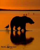 Photography Contest Grand Prize Winner - August 2012: Morning Light