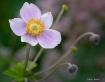 Anemone#3