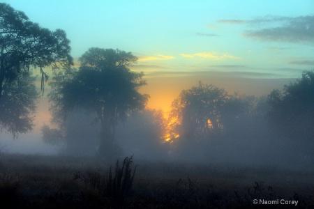 Glorious Foggy Sunrise