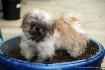 bad puppy :)