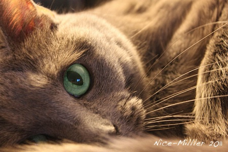 a cat s eye view