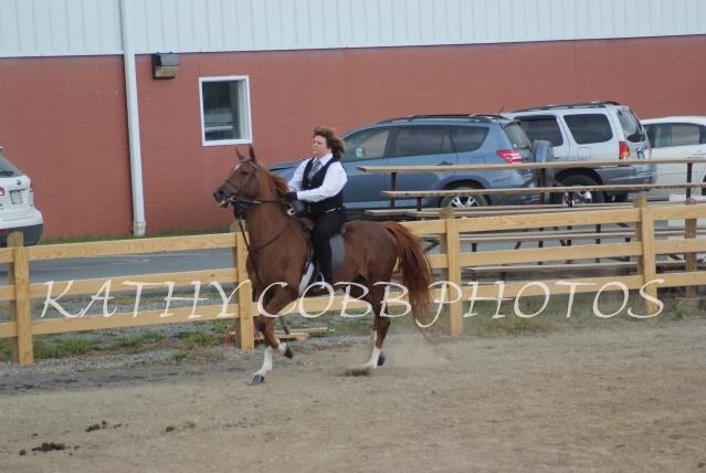 229 hc fair horse show 2012 - ID: 13282747 © Kathy Cobb