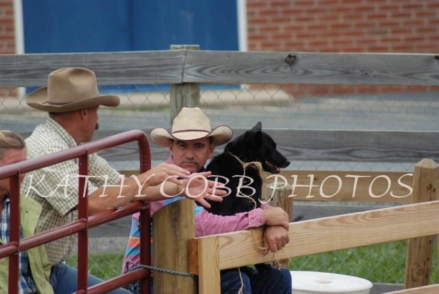 483 hc fair horse show 2012 - ID: 13282935 © Kathy Cobb