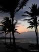 Palm trees at Sun...