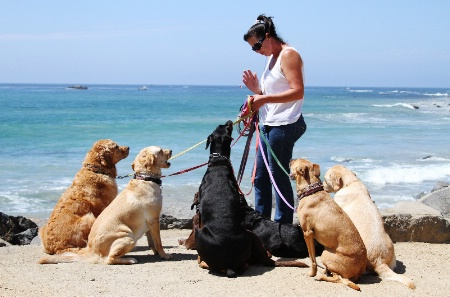 """Doggy Education at the Beach"""