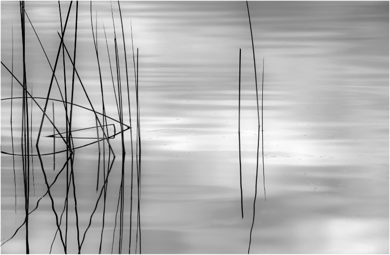 Reeds - ID: 13288742 © Kelly Pape