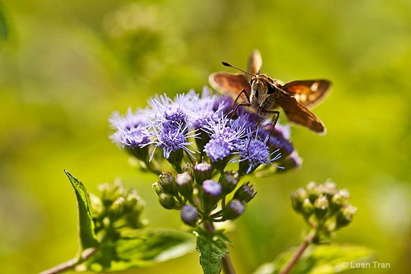 Little Butterfly 1 - ID: 13289332 © Loan Tran