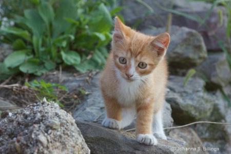 Kitten on the Wall