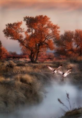 Dawn on the Bosque