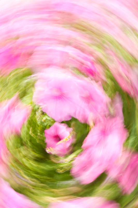 Floral Whirl - ID: 13305814 © Karen Celella