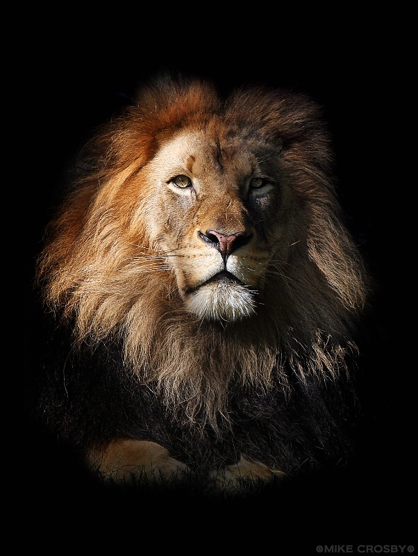 The King ...