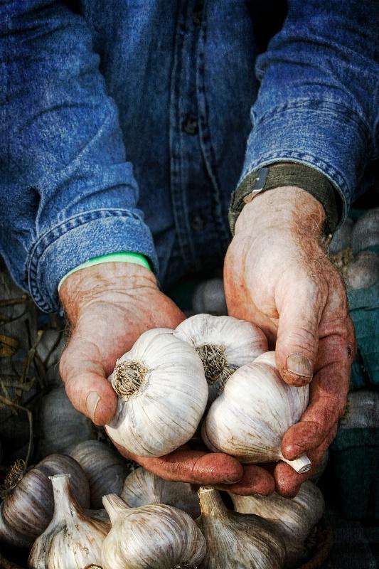 Have Some Garlic