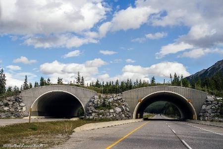 Million Dollar Wildlife Overpass