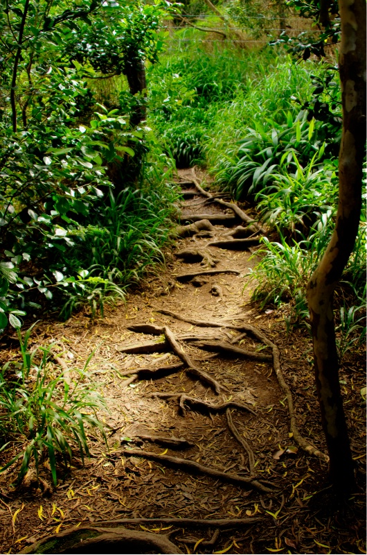 Hiking Trail to Twin Falls