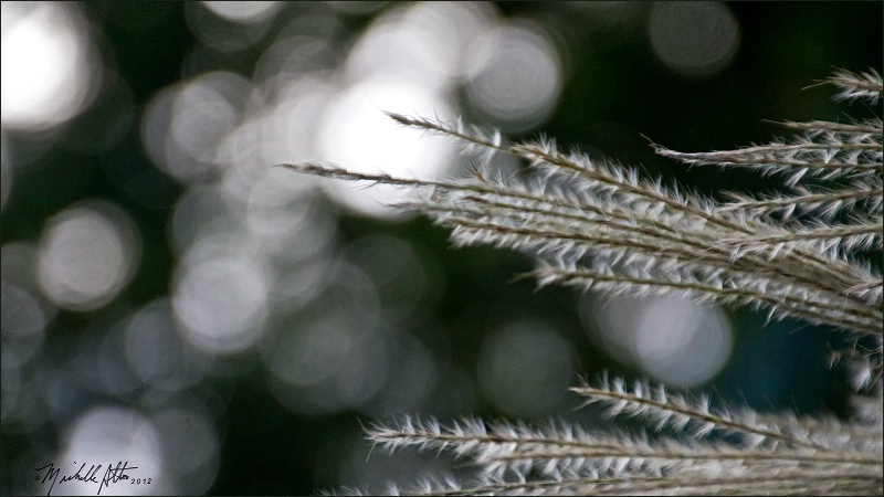 Autumn Pampas Grass in Sunlight