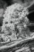 Elegant Old Tree
