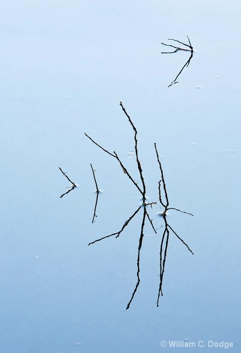 Pond Twigs