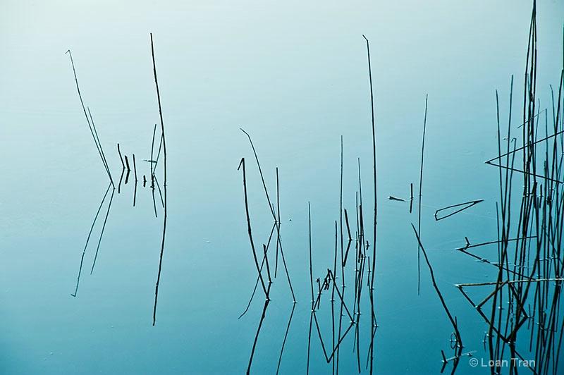 Calligraphy 1 - ID: 13345583 © Loan Tran