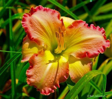 Bloom among the Green