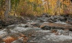 Monarch River Asp...