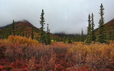 Fall Palette along Denali Highway