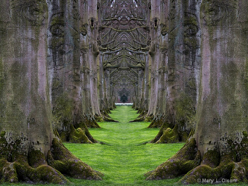 Nature's Cathedral