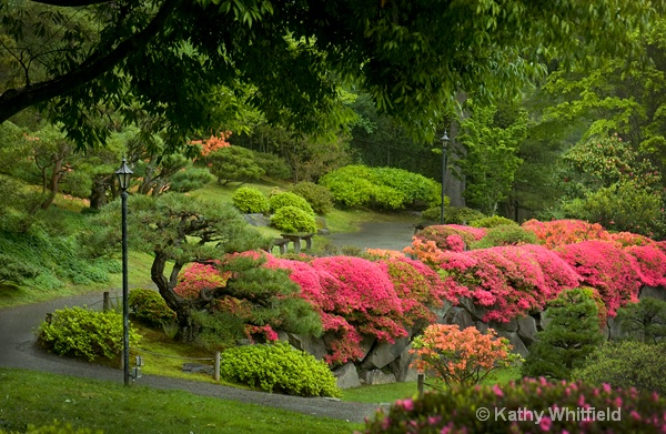 Japanese Garden Seattle12 7 - ID: 13363720 © Kathy K. Whitfield