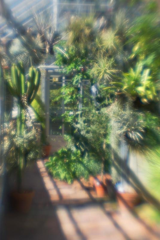 Basel Botanical Garden Desert House - ID: 13366105 © Nora Odendahl