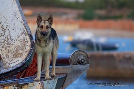 The Fisherman's Friend
